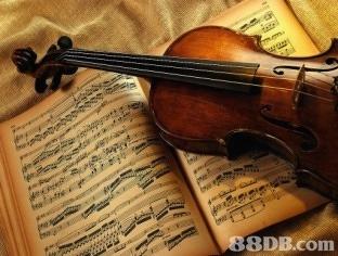 8DB.com  violin,musical instrument,violin family,violinist,viola
