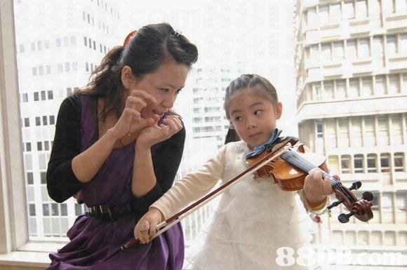 violin,violin family,violinist,string instrument,violist