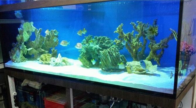 aquarium,freshwater aquarium,aquarium lighting,aquarium decor,majorelle blue