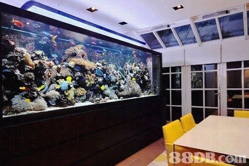 aquarium,