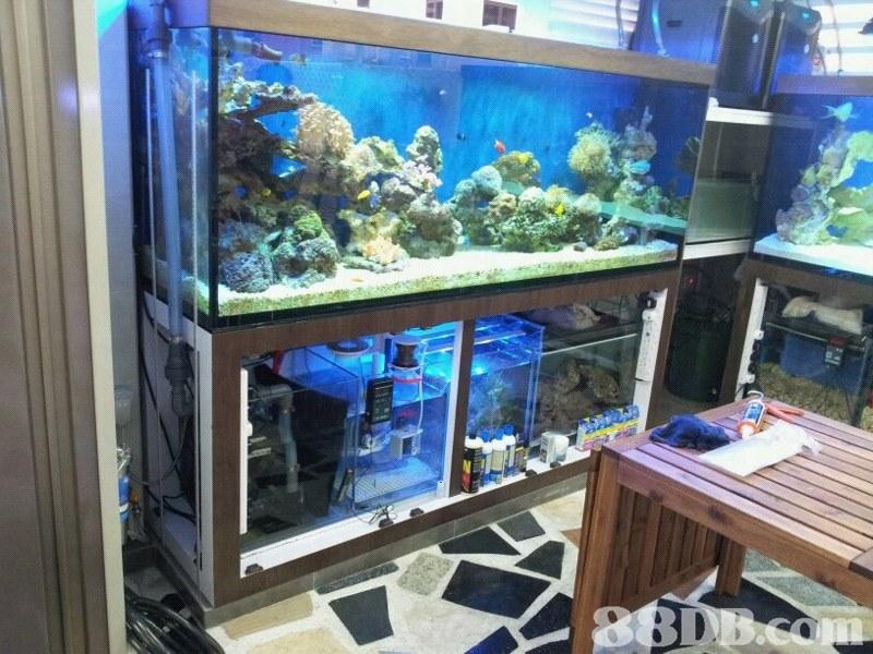 aquarium,freshwater aquarium