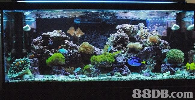 reef,aquarium,coral reef,aquarium lighting,freshwater aquarium