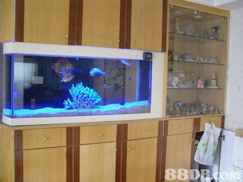 88DRdo  aquarium,display case,freshwater aquarium