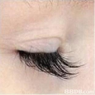 Eyebrow,Eyelash,Eye,Skin,Eye shadow