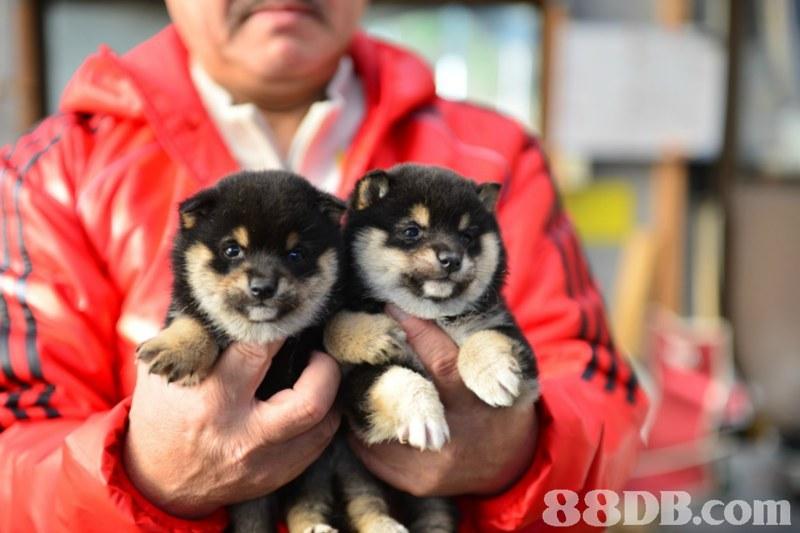 m,dog,dog like mammal,dog breed,mammal,dog breed group
