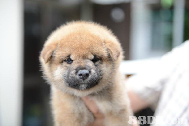 dog,dog like mammal,dog breed,dog breed group,snout
