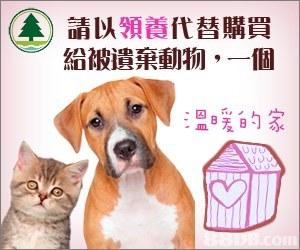請以領養代替購買 給被遺棄動物,一個 溫暖的家  dog breed,dog,photo caption,cat,snout