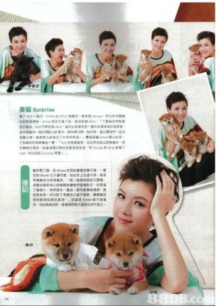 養貓Surprise HNMOde已大瀰可愛 抱在手上炕過ㄨ停 將畫 後 記 犬 8 .C,human behavior,media,