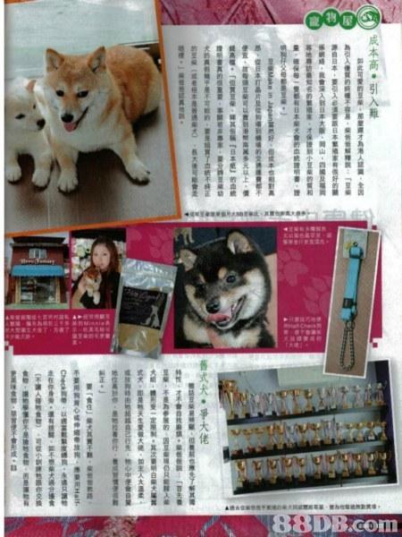 幼統價 DB. com 舊式犬.爭大佬,dog,dog like mammal,advertising,dog breed group,photo caption