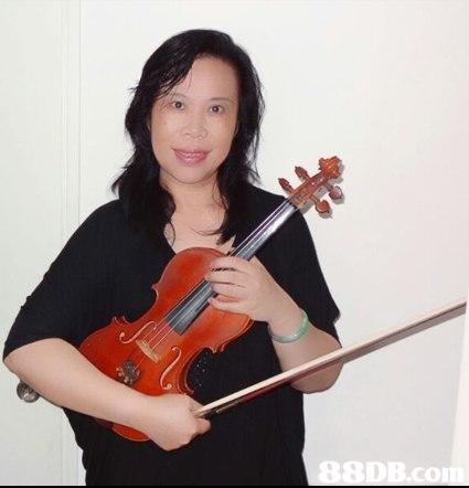 88DB.co  violin,violinist,violin family,violist,viola