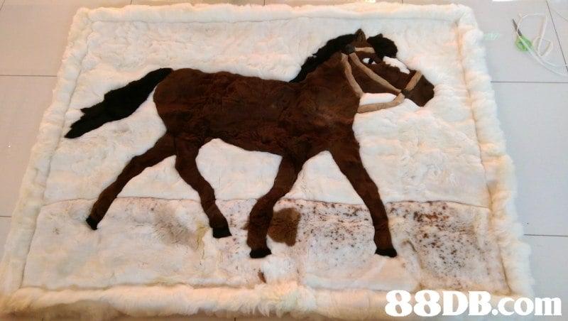 罕有 Peru Alpaca Rugs 100 秘魯製 入口 羊駝毛地毯 Carpet 草泥馬 溫暖 冬日 家居