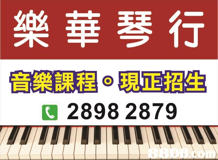 樂華琴行 C 2898 2879 LI 88DBaom  Musical instrument,Electronic instrument,Keyboard,Font,Musical keyboard
