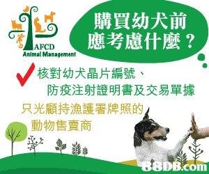 購買幼犬前 應考慮什麼? AFCD Animal Management 核對幼犬晶片編號 防疫注射證明書及交易單據 只光顧持漁護署牌照的 動物售賣商 8DB.com  font,product,advertising,