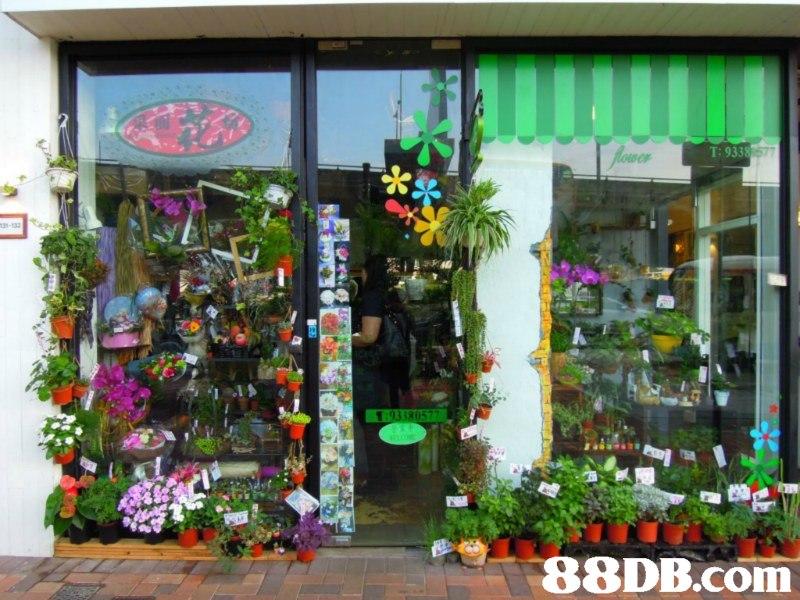 Alower T:9338 577 a-132 93380577   Floristry,Floral design,Flower Arranging,Building,Retail