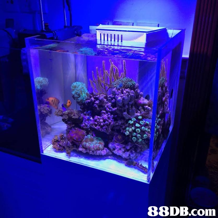 aquarium lighting,reef,aquarium,coral reef,cobalt blue