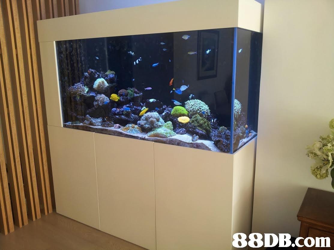 aquarium,aquarium lighting,freshwater aquarium