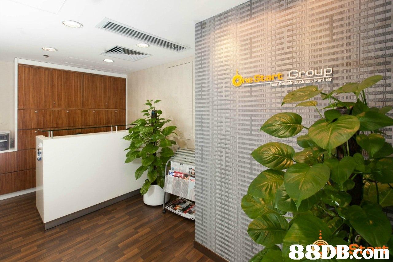 Property,Houseplant,Real estate,Interior design,Wall