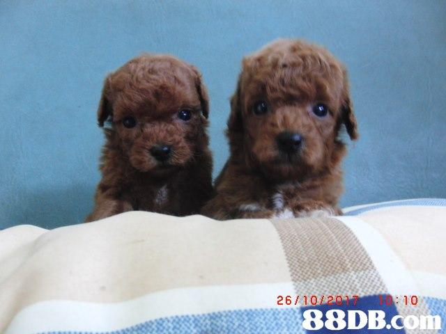 26/10/2017 10,Dog,Mammal,Vertebrate,Canidae,Dog breed