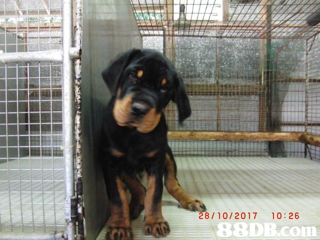 28/10/2017 10:26,Dog,Vertebrate,Canidae,Dog breed,Mammal