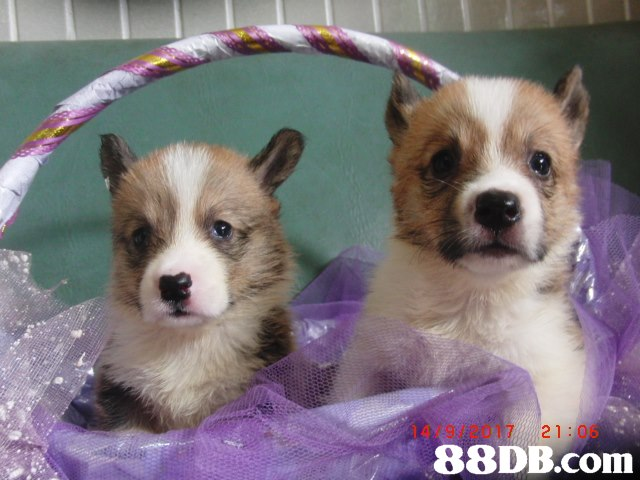 21:06,Dog,Mammal,Vertebrate,Canidae,Dog breed