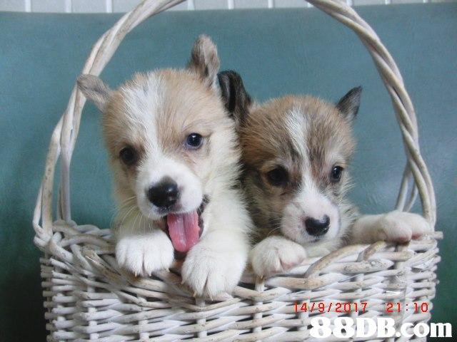 14/9/2017 21:10,Dog,Mammal,Vertebrate,Canidae,Puppy