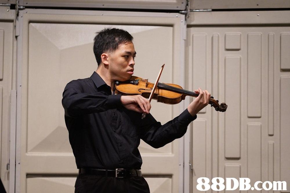 violin,violinist,violin family,violist,viola