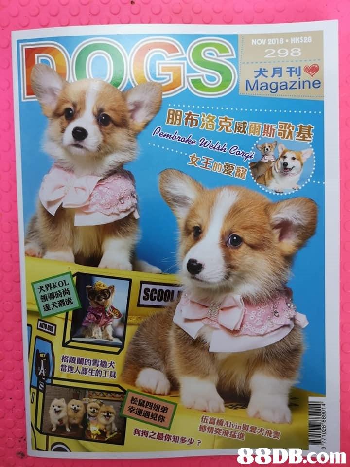 "NOV 2018 HHS 28 298 犬月刊 Magazine 朋布洛克威爾 犬界KOL 領導時尚 邃犬潮流 SCOO 格陵蘭的雪橇犬 當地人謀生的工具 松鼠四姐弟 幸運遇見你 伍富橋Alvin與""ARRY 感情突飛猛進 狗狗之最你知多少? 8DB.comm 哥,dog,dog like mammal,welsh corgi,dog breed,fauna"