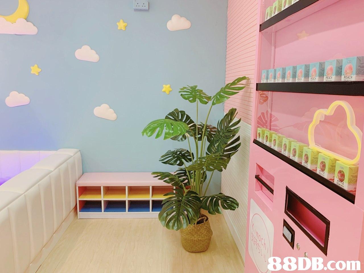 PEACH PEACH PEACH,Wall,Room,Pink,Property,Interior design