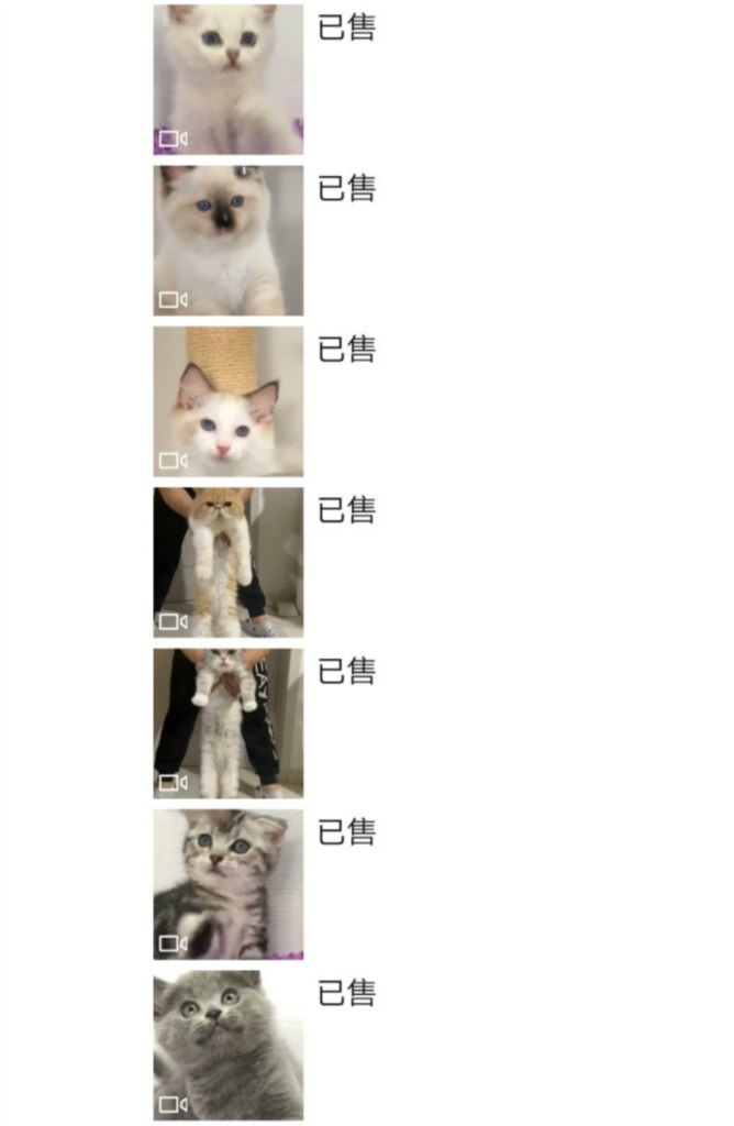 已售 已售 已售 已售 已售 已售 已售,Cat,Small to medium-sized cats,Felidae,Kitten,Fur